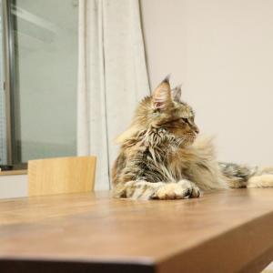 リズムさん今日妊娠57日目、昨日動物病院で検査に行きました!