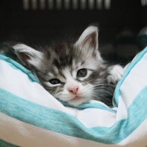 猫ベッドでくつろいで居るアンディ君