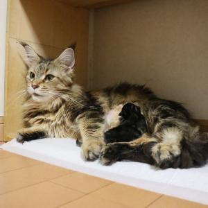 キャサリンママ赤ちゃん1匹産みましたが、、、