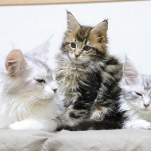 愛子ママが優しいお話を子猫達に聞かせます!