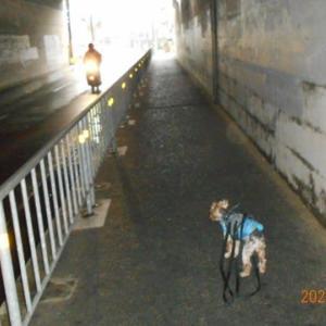 雨の日の散歩は、トンネルの中