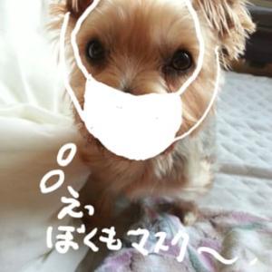 ええ~~香港で新型コロナウイルス、犬にも感染~~