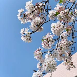 4806 * お花を見ると *