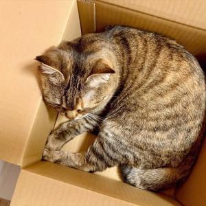 4820 * 捨て猫体質 *