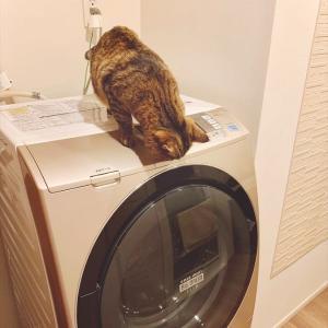 4828 * 洗濯乾燥機の修理 *