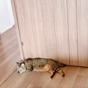 4850 * 猫型ドアストッパー *