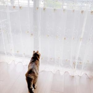 4932 * 新しいカーテン *