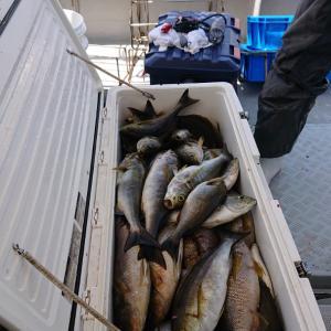 6月21日イサキ釣り