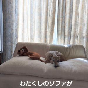 冬仕様のソファへ