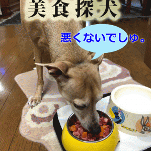 キュウ、9才にして初めて生肉を食す。
