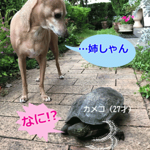 カメコ姉さんは指図されるのが嫌い。
