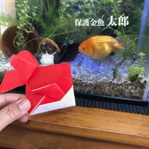 保護金魚太郎の友達の運命やいかに