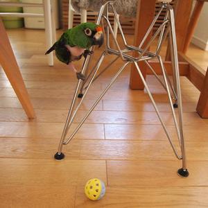椅子とインコ(オウム・鳥)