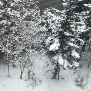 札幌の「嵐」は何処へ?