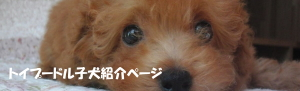 【わんこのためのセミナー】オンライン開催・ワンちゃんと暮らしてる人も必見!!/ZOOM・アンガーマネジメント・資産の残し方・犬の相続