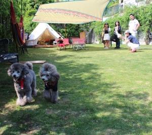 【トイプードル子犬見学できます】東京都荒川区でブリーダーの子犬に会えます。