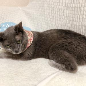 猫のマフラーで、冷え対策
