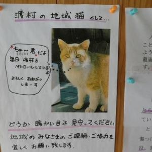 パトロール猫