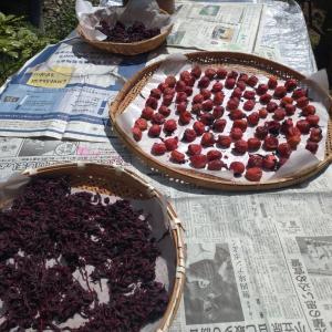 鰯のかば焼き弁当~梅干しの季節
