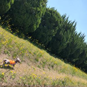 黄色の花道