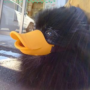 黒鳥なメラン