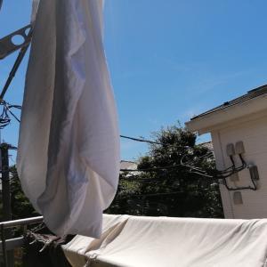 絶好のシーツ洗濯日和です!