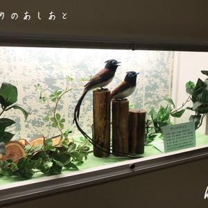 宮城県立こども病院7月の展示『サンコウチョウ』