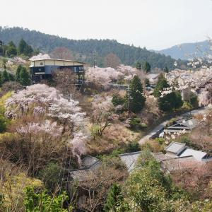 一目千本 奈良・吉野山へ