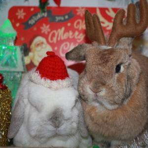 ラスト!クリスマス♪ お泊り元気!!
