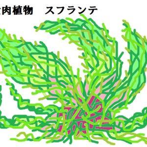 食肉植物スフランテ(ウルトラマン)