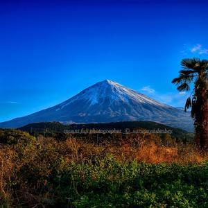 今日の富士山 11/11撮影