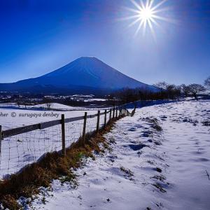 雪の馬牧場【銀世界】