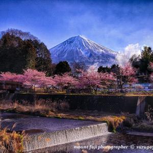 これから桜の開花チェックで忙しく成る。
