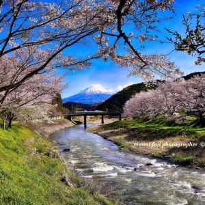 桜まつりは中止だが静かに撮影できる。