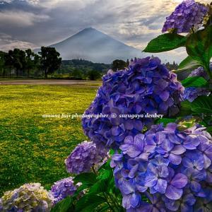 雨蛙と紫陽花はベストな組合せです。