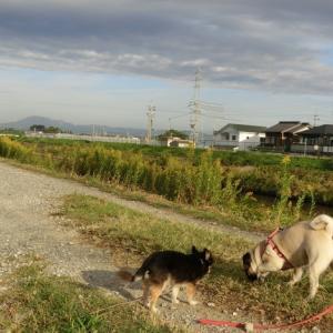 ナイスショットで毎日楽しい散歩☆彡