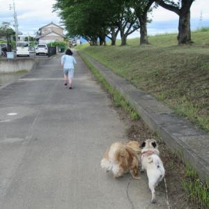母さんだけでの散歩寂しかったけど・・・☆彡