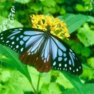 【滅亡】現在、世界では昆虫たちが物凄い勢いで姿を消しています…これは地球が崩壊していく前触れかもしれません