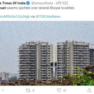 【蝗害】4000億匹のバッタ「日本襲来の可能性」現在はインドに居る模様、さらに突然変異で「どう猛化」
