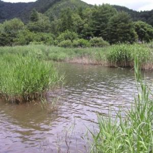 【富士山】2011年以来、精進湖近くに9年振り幻の湖「赤池」が出現する!