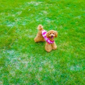 【GPS】犬は「地磁気」を感知して家に帰宅する事が出来ると判明