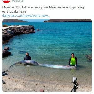 【地震前兆】メキシコで巨大な「リュウグウノツカイ」が捕獲される…地元では「巨大地震の前触れ」と噂される