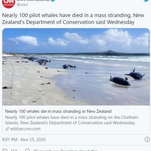 【前触れ】ニュージーランドでゴンドウクジラの大群が打ち上げられる…既に「100頭近く」が死ぬ