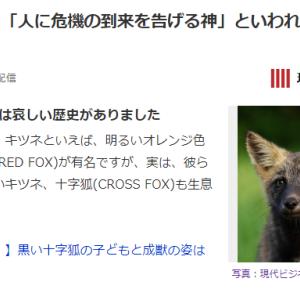 【アイヌ伝説】北海道で「人に危機の到来を告げる神」と言われている黒い十字がある「キツネ」が出現!