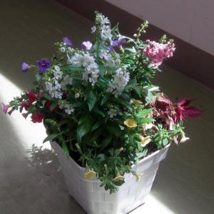 7月のガーデニング教室は夏の寄せ植え