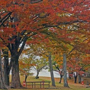 信玄堤の紅葉