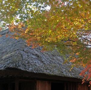紅葉と茅葺き屋根
