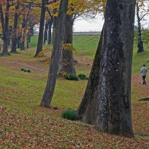 枯れ葉の林を歩く