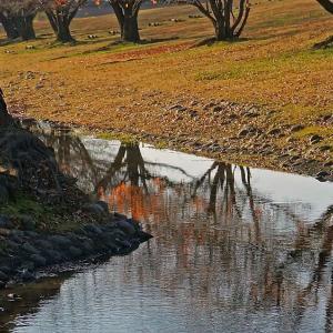 初冬の小川