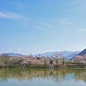 湖畔の桜 1